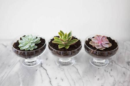 7 Inspirasi Kreasi Bunga untuk Mempercantik Ruangan 8