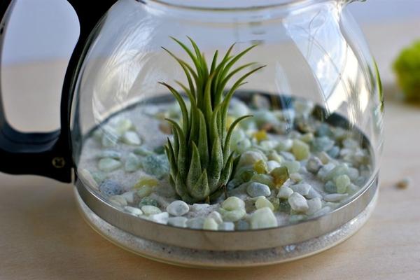 Tata Tanaman, pasir dan batu sesuai selera KabarDunia.com_Cara-Membuat-Terrarium-Tanaman-Indoor-Dalam-Teko-3_