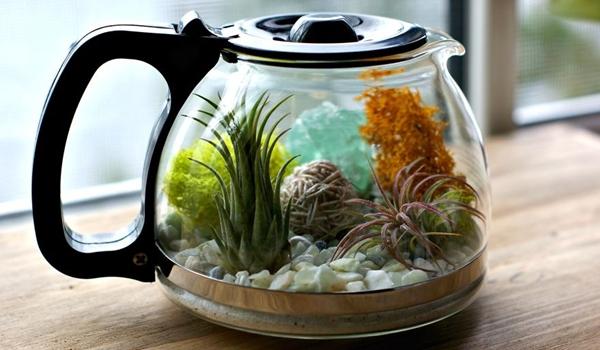 Contoh Terrarium yang sudah selesai KabarDunia.com_Cara-Membuat-Terrarium-Tanaman-Indoor-Dalam-Teko-4_
