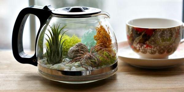 Cara Membuat Terrarium, Tanaman Indoor Dalam Teko