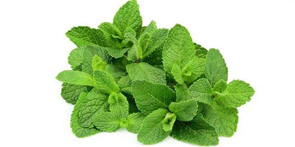 Tanaman Herbal yang Bisa Mencegah Penyakit Kanker