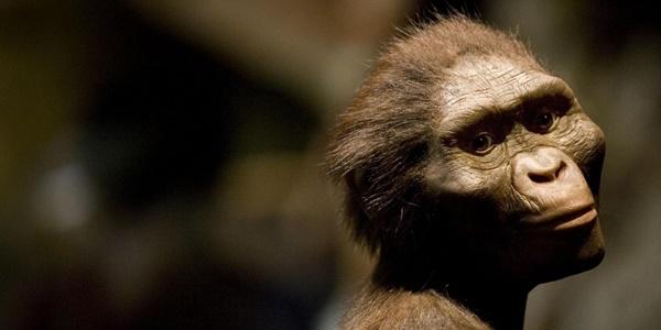 Mengetahui Fakta Dibalik Pertanyaan Siapakah Lucy si Australopithecus