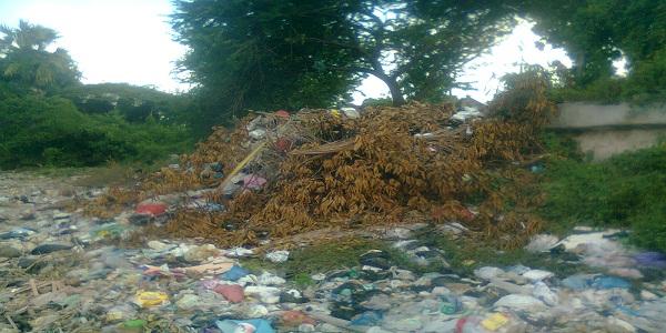 Sampah Setingi Tanggul Tangkis Laut Sedayulawas