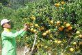 Serunya Memetik Buah Langsung dari Pohonnya di Kusuma Agrowisata Batu