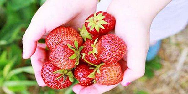 Kaya Vitamin C, Inilah Manfaat Buah Strawberry untuk Kesehatan Tubuhmu