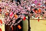 Kenapa Imlek Identik dengan Pohon Angpao Inilah Kisah Dibaliknya