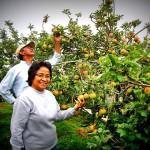 Wisata Malang - petik apel agro wisata