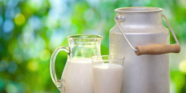 Mengenali 5 Manfaat Susu Kerbau Bagi Kesehatan Manusia