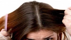 rambut berkutu
