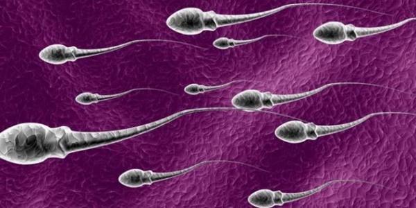 Pihak UGM Sesalkan Beredarnya Berita Hoax Donor Sperma Dapat 50 ribu