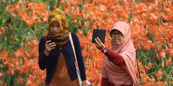 Baru Seminggu Heboh, Kebun Bunga Amaryllis yang Indah Itu Kini Hancur 2
