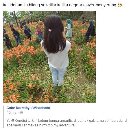 Baru Seminggu Heboh, Kebun Bunga Amaryllis yang Indah Itu Kini Hancur
