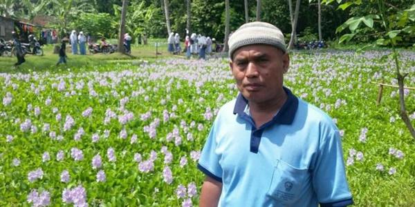 Usai Taman Amarilys, Kini Muncul Taman Bunga Enceng Gondok di Bantul
