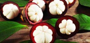 manfaat kulit buah manggis, cara mengolah kulit buah manggis, manfaat buah manggis untuk kecantikan, manfaat buah manggis untuk ibu hamil, budidaya buah manggis, khasiat buah manggis untuk jerawat, kandungan buah manggis, manfaat buah manggis untuk diabetes